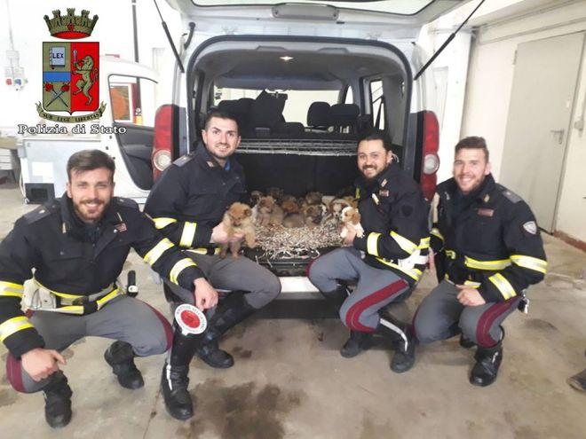 Bologna, cuccioli salvati lungo l'autostrada A1. Le foto