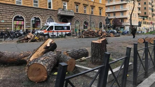 Alberi abbattuti a San Giovanni