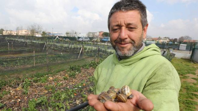 L'allevamento di lumache