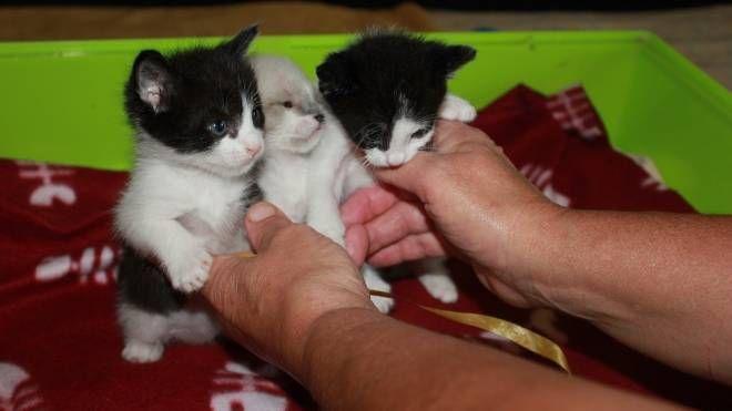 La collina dei gatti in via Agati a Pistoia