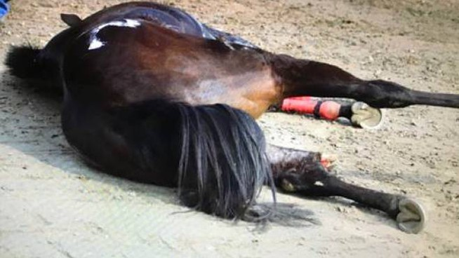 Il cavallo a terra dopo l'incidente