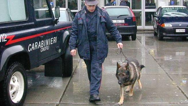 Carabinieri con i cani antidroga fuori da scuola