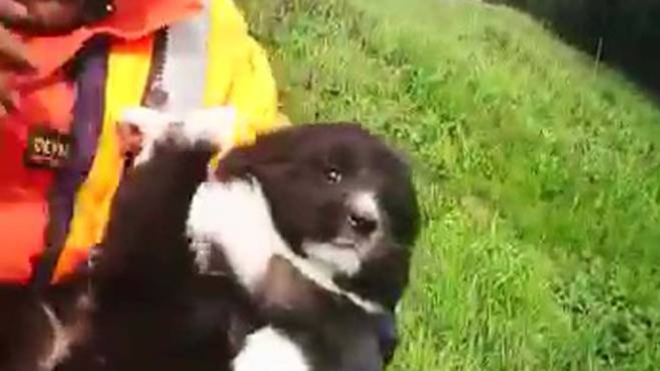 La cucciola che si è salvata