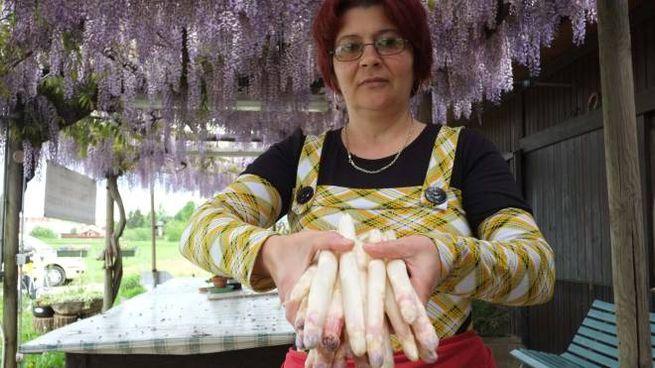 Gusto e colore dell'asparago rosa derivano  dalle caratteristiche uniche del terreno argilloso di Mezzago
