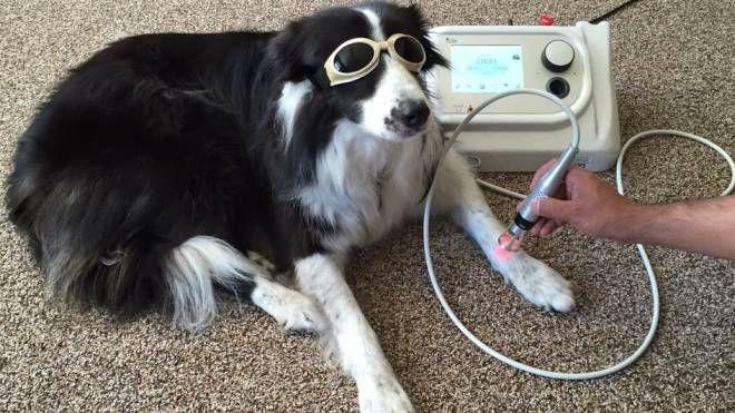 Nuove tecnologie per la veterinaria