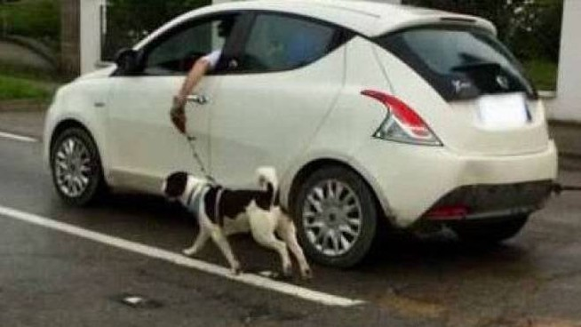 Il cane segue l'auto correndo