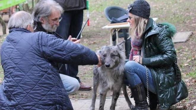 Un cane delle Alpi Apuane con la sua padrona mentre viene controllato