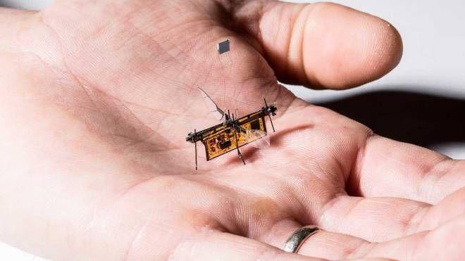 Robot o mosca? (Foto: Mark Stone/University of Washington)