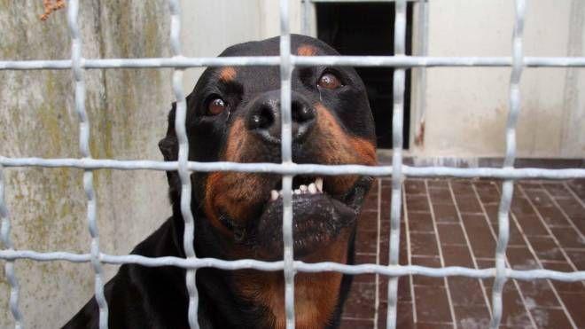 I due cani sono stati sequestrati e portati al canile (foto d'archivio)