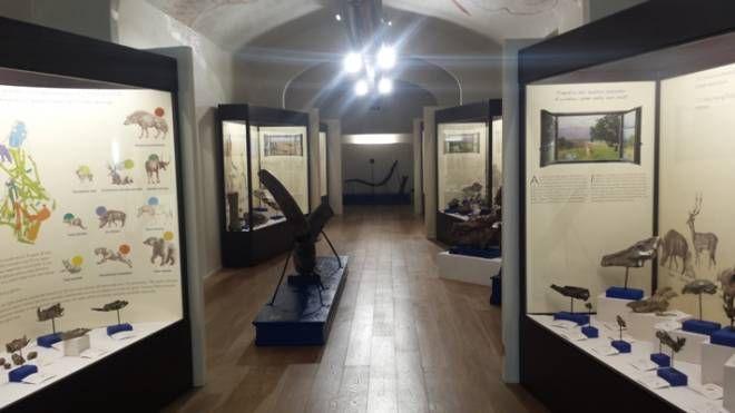 Gli interni del Paleontologico di Montevarchi