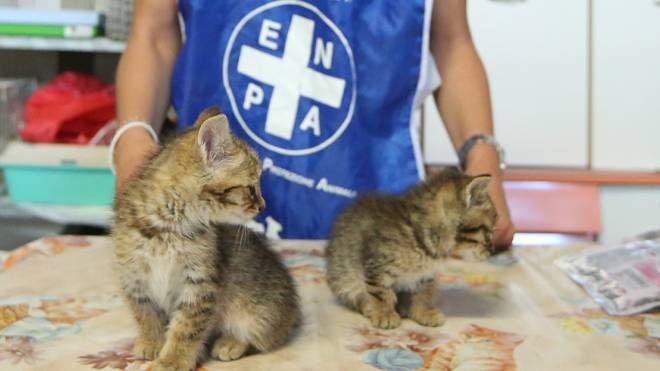 Due dei gattini ospitati in una struttura dell'Enpa