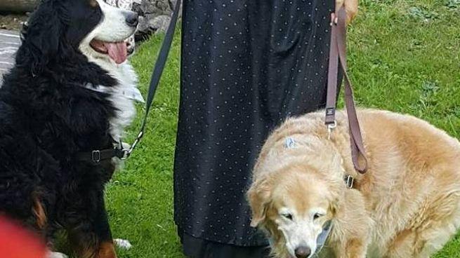 I due cani al guinzaglio della padrona