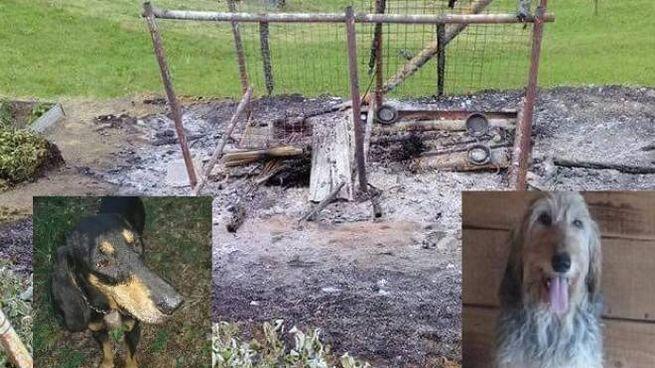 La cuccia data alle fiamme e i due cani morti, Bobo e Lea