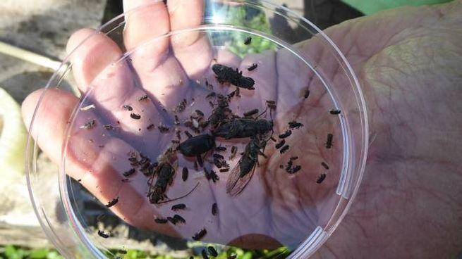 Alcuni degli insetti catturati