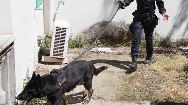 Nelle ultime settimane sono stati intensificati i controlli da parte dei carabinieri sul territorio di Castelfiorentino (foto d'archivio)