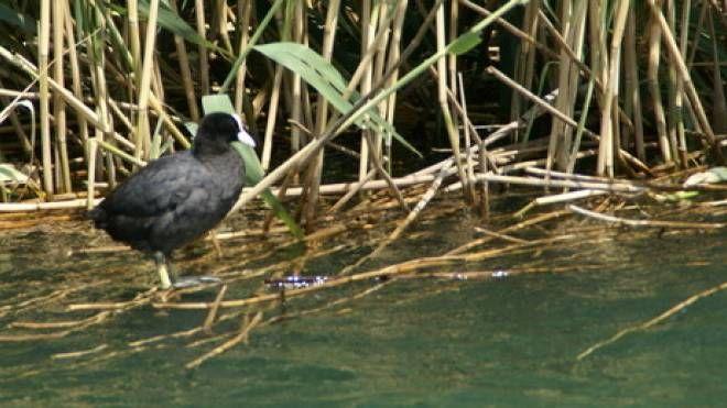 Il lago di Novate Mezzola