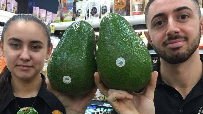 L'avocado gigante pesa in media 1,2 kg