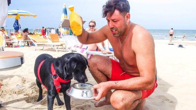Da questa estate  in Riviera i cani possono immergersi in mare in alcune zone  e in orari limitati Ma non a tutti fa piacere tuffarsi vicino  a Fido