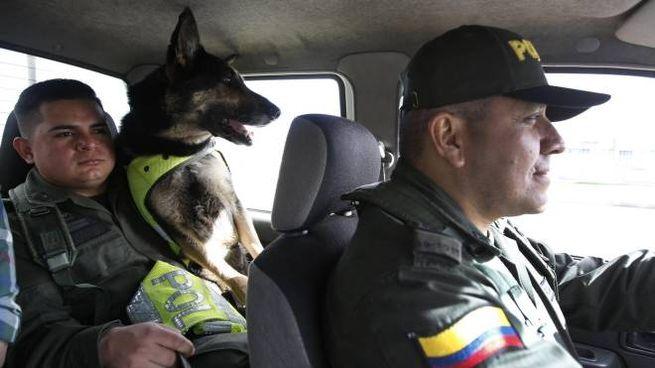 Colombia Narcoboss Mette Maxi Taglia Su Cane Poliziotto Esteri