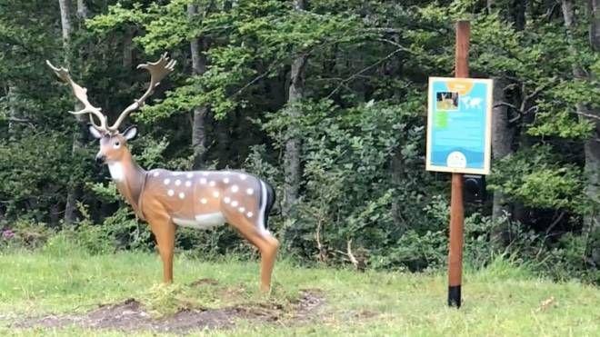 Animal Park a Sestola