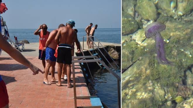 Meduse sulla costa livornese: è allarme (Novi)