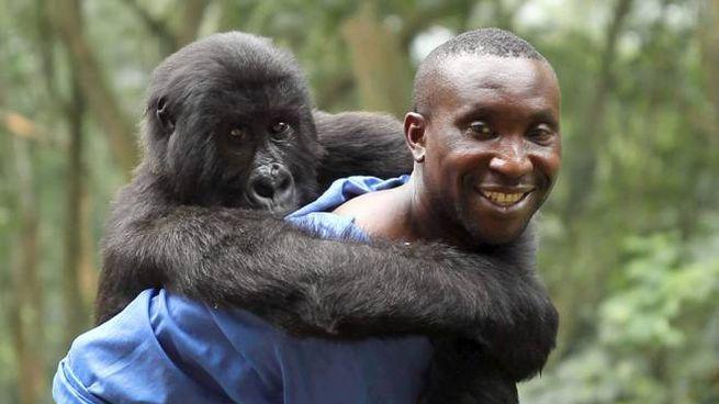 Una scena di 'Virunga' – Foto: Grain Media/Violet Films/Netflix