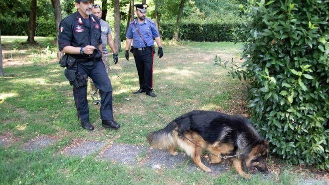Al blitz scattato alle Cerbaie, oltre ai militari della Compagnia  di Empoli, ha partecipato anche il cane antidroga Batman