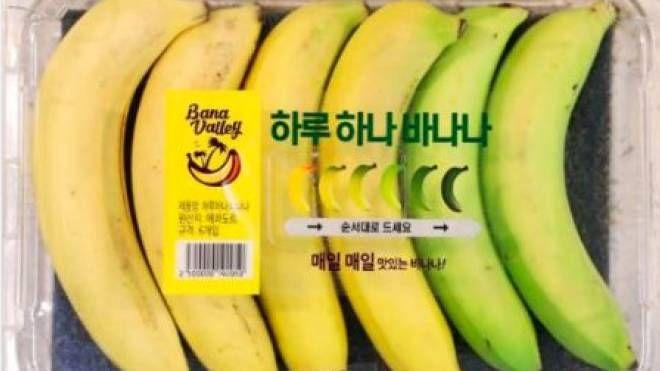 Banane, la confezione settimanale: mai più frutti marroni