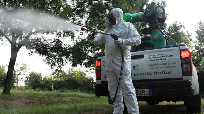 ZANZARE NEL MIRINO Operatori al lavoro per un  intervento di disinfestazione in un'area verde (foto di repertorio)