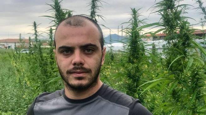 Giacomo Carmazzi tra le piante di cannabis legale coltivate in azienda