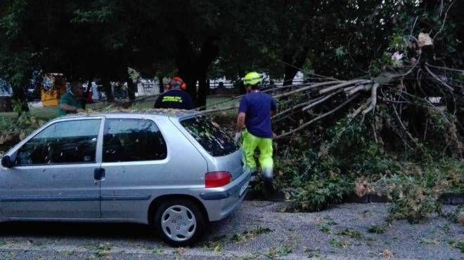 Decine gli interventi effettuati dai pompieri e anche dai vigili urbani (Foto Cascio)