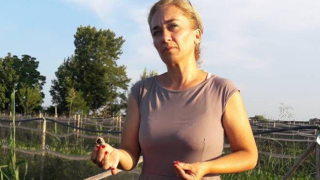 Nicoletta Prelevato mostra le lumache morte