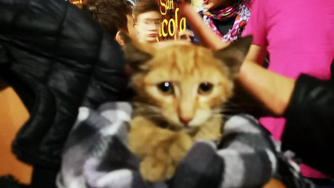 Il gattino salvato dai vigili del fuoco