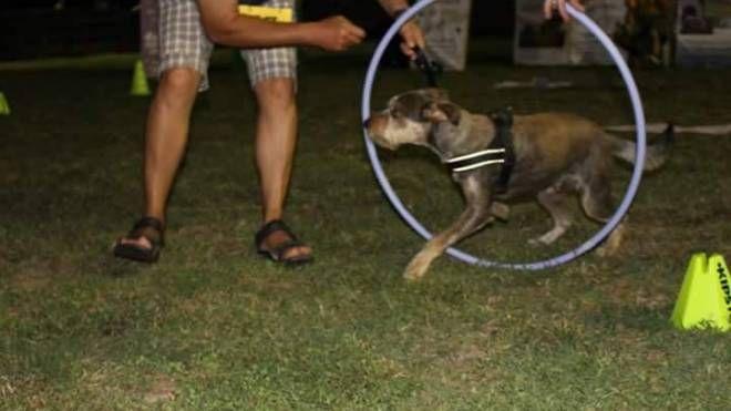 Un cagnolino alle prese con il cerchio