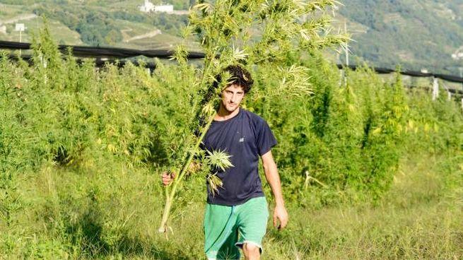 Andrea Pelacchi, coltivatore di cannabis terapeutica