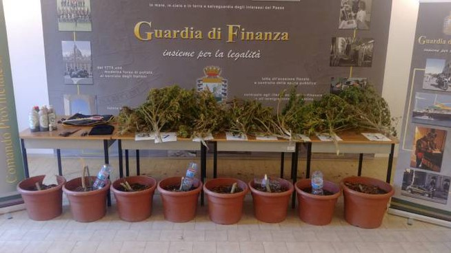 Piante di marijuana sequestrate
