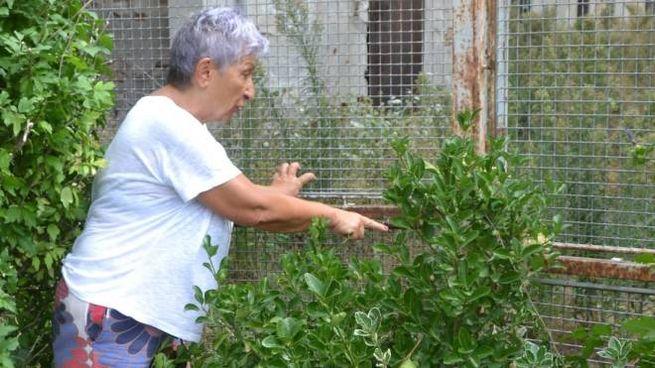 Silvia Panziera, 64 anni