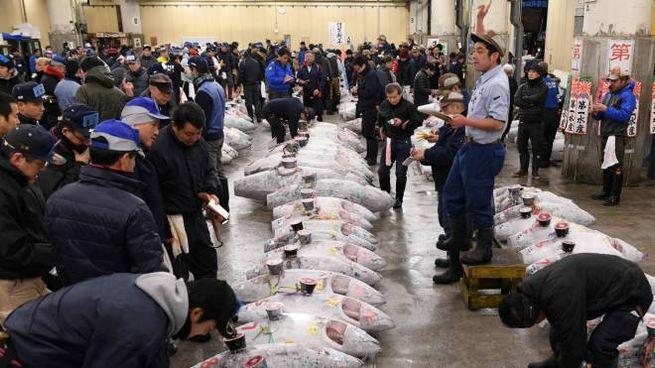 L'asta del tonno a Tsukiji