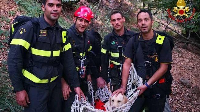Il Labrador recuperato dai vigili del fuoco a Induno Olona