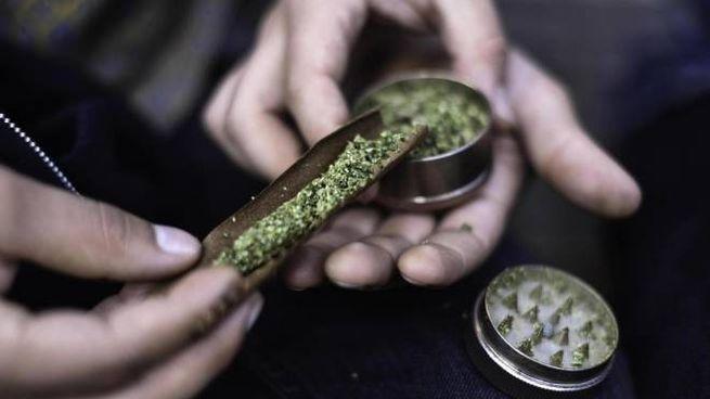 Secondo la ricerca presentata a San Patrignano è possibile ottenere un effetto psicoattivo da pochi grammi di cannabis light (Foto di repertorio Ansa)