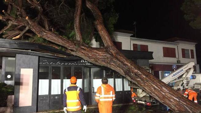 Maltempo a Cesenatico, un pino è caduto sui locali dell'ex Re Leone, chiuso da tempo