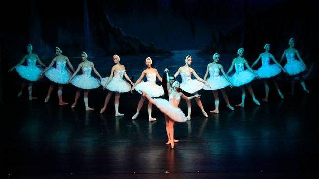 Civitanova danza, l'11 gennaio Il lago dei cigni al teatro Rossini