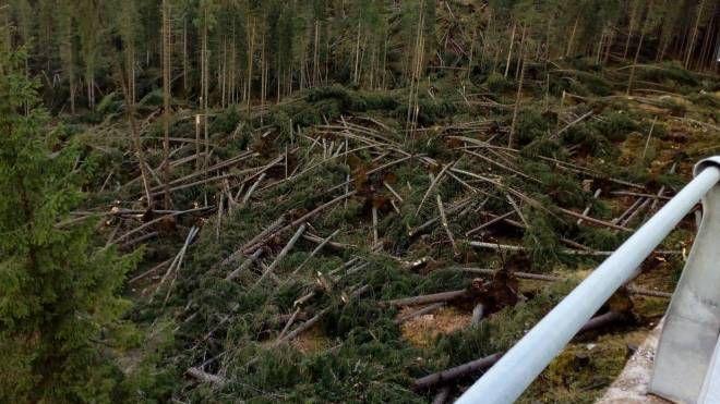 Gli alberi della Val di Fiemme devastati dal maltempo