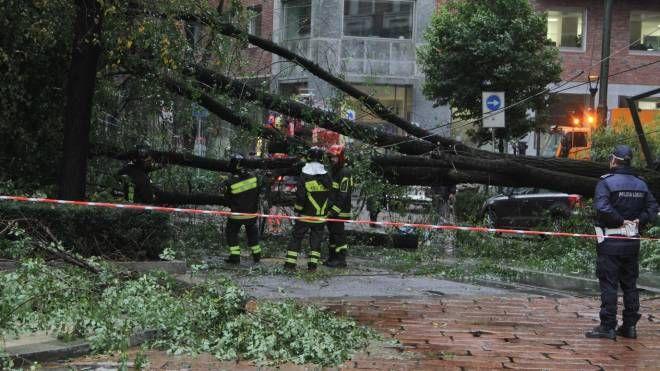 Un enorme albero caduto a Milano (Newpresse)