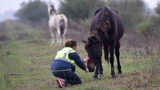 Arrivano i primi aiuti per i cavalli (foto BusinessPress)