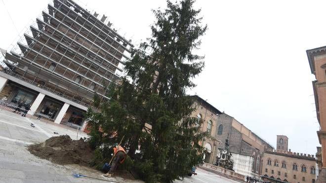 Decorazioni Natalizie Zalando.Bologna L Albero Di Natale Arriva In Piazza Re Enzo Le Foto Cosa