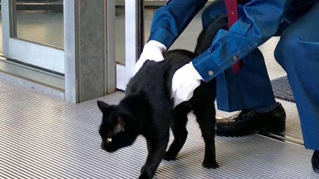 I Due Gatti Giapponesi Che Da Anni Provano A Entrare Al Museo