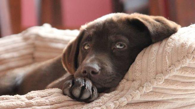 Lhotel Di Lusso Per Cani Con Pavimenti Riscaldati E Musica