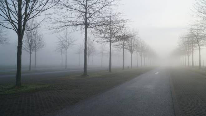 Una strada invasa dalla nebbia
