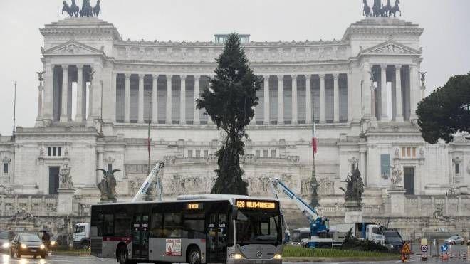 L'albero di Natale in piazza Venezia  (Ansa)